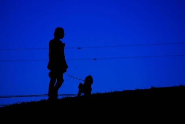夜の散歩で犬のフンを放置する飼い主