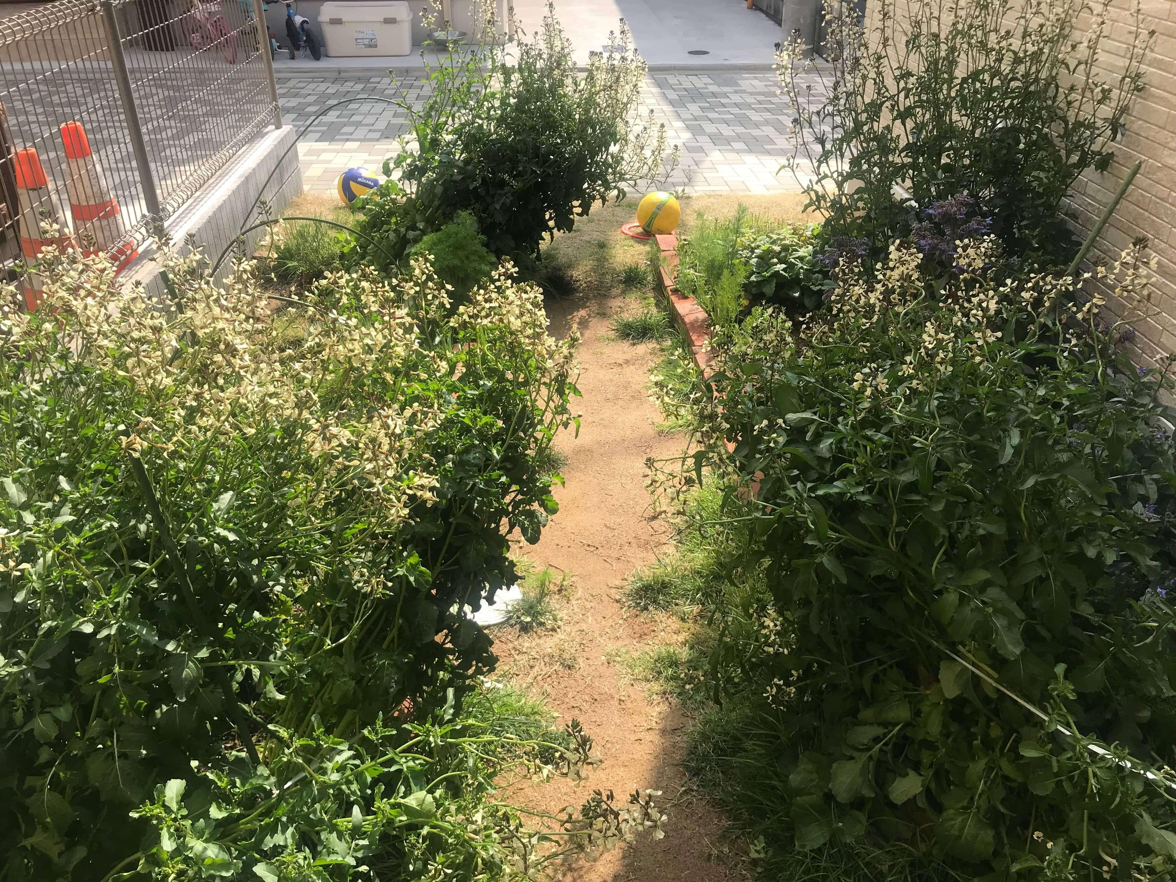 ハーブが植えられた花壇