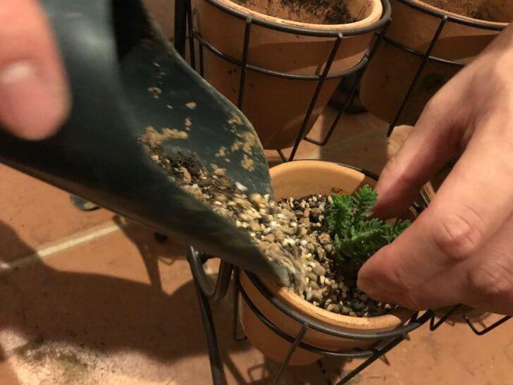 多肉植物の植え方育て方