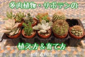 多肉植物の育て方
